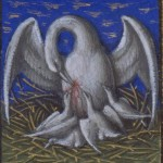 pelican_barthelemy